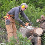 Cutting firewood.