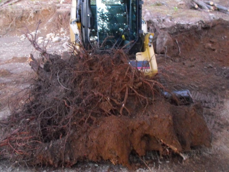 20140924-CATnewteeth-stump1