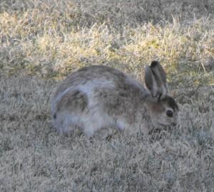 bunny rabbits,wildlife