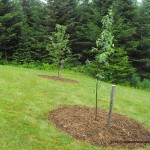 gardening,landscaping Red Gravenstein and Red Gala apple trees