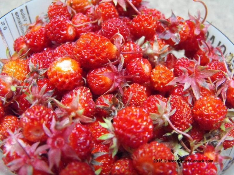 wild strawberries,natural