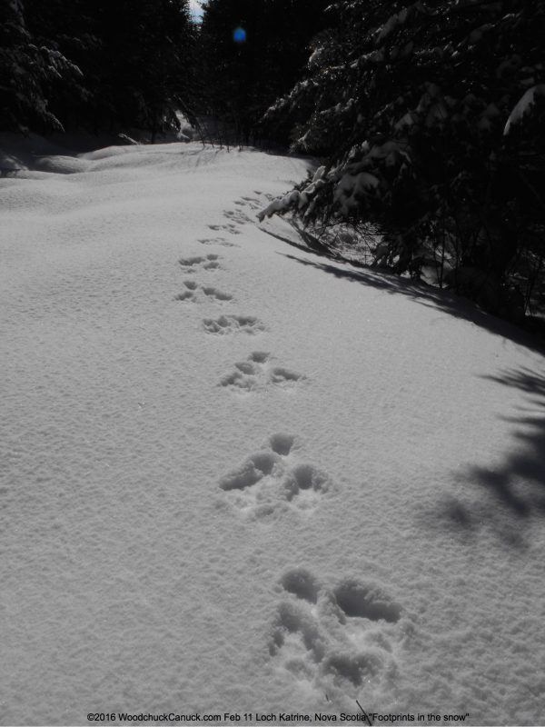footprints,snow,winter,Loch Katrine,Nova Scotia