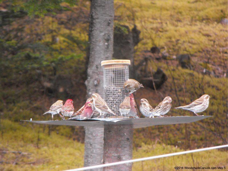 20160505-birds1