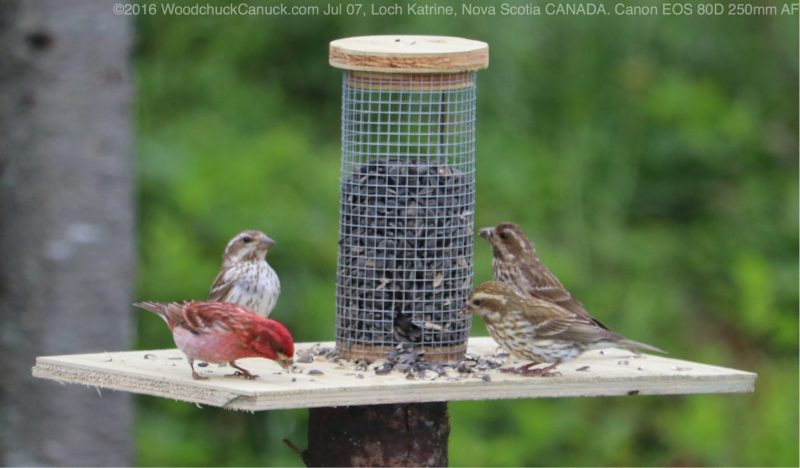 birdfeeders,wildlife,animals