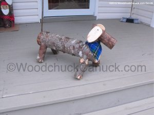 Dachshunds,log dogs,dogs,pets,animals