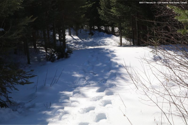 snow shoeing in Nova Scotia