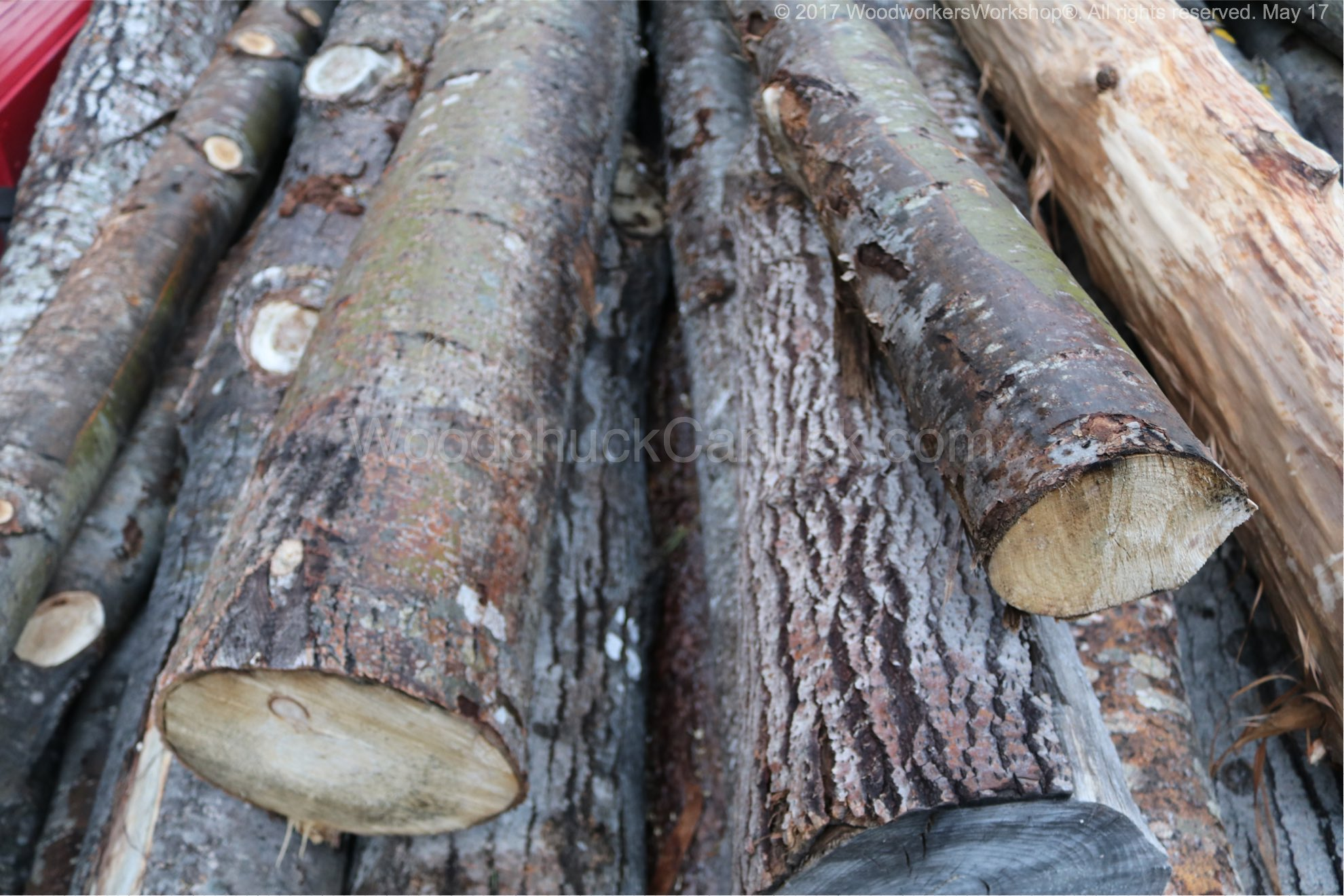 Balsam Poplar Logs And Lumber Woodchuckcanuck Com