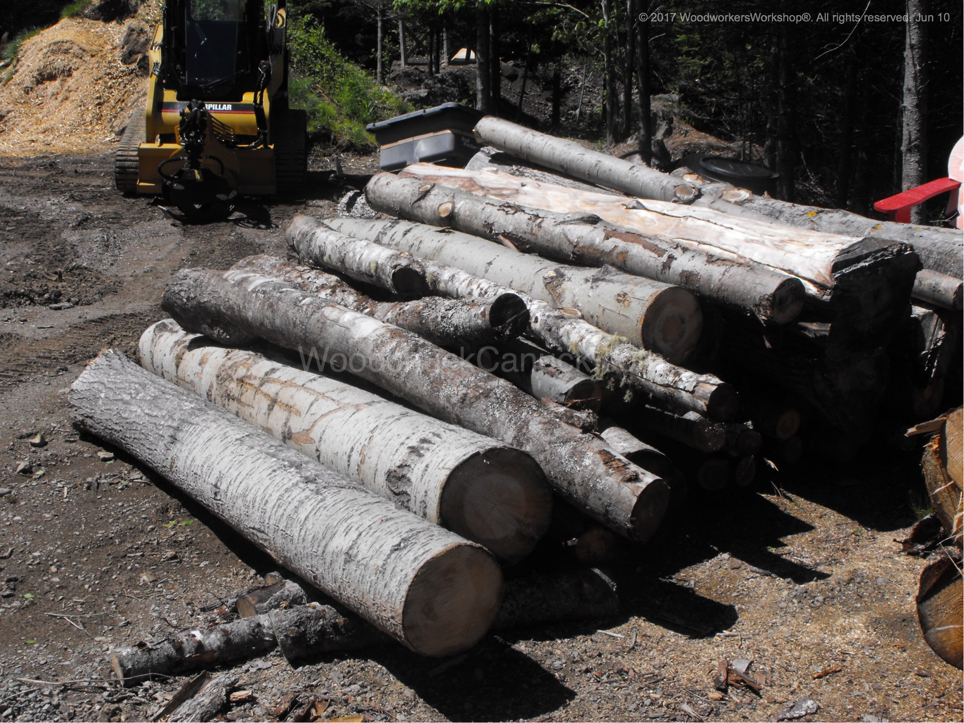 poplar logs ready for the mill.