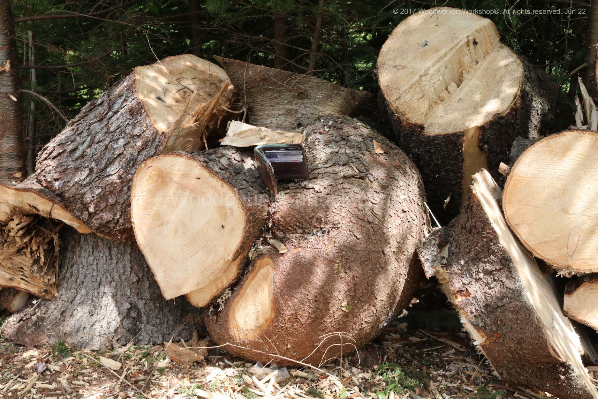 Tree Removal In Addington Forks Woodchuckcanuck Com