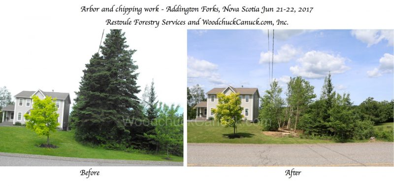 forestry,arborist work