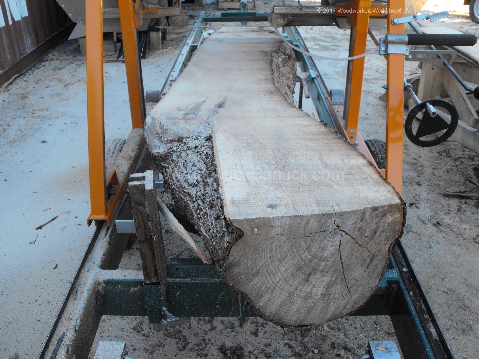 live edge sugar maple slabs