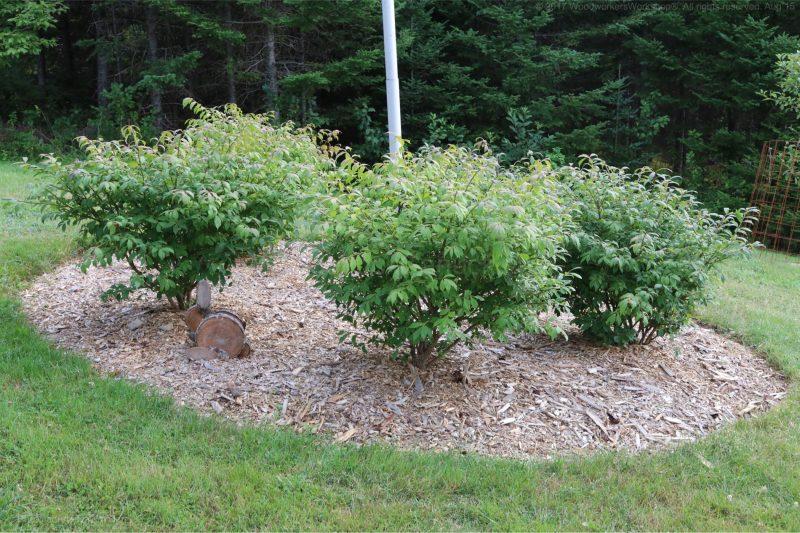 burning bushes,landscaping,gardening,nova scotia