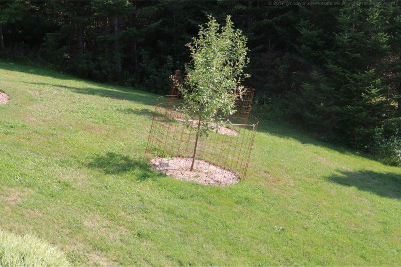 apple trees,gardining,landscaping,nova scotia