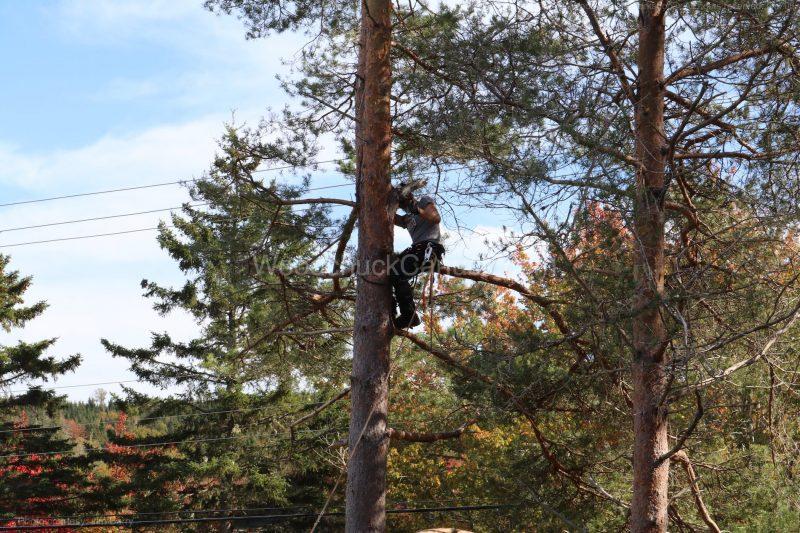 Dave,arborist,trees,pine