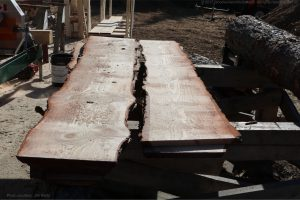 pine log slabs with live edge