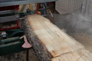 Sugar maple short log being opened up.
