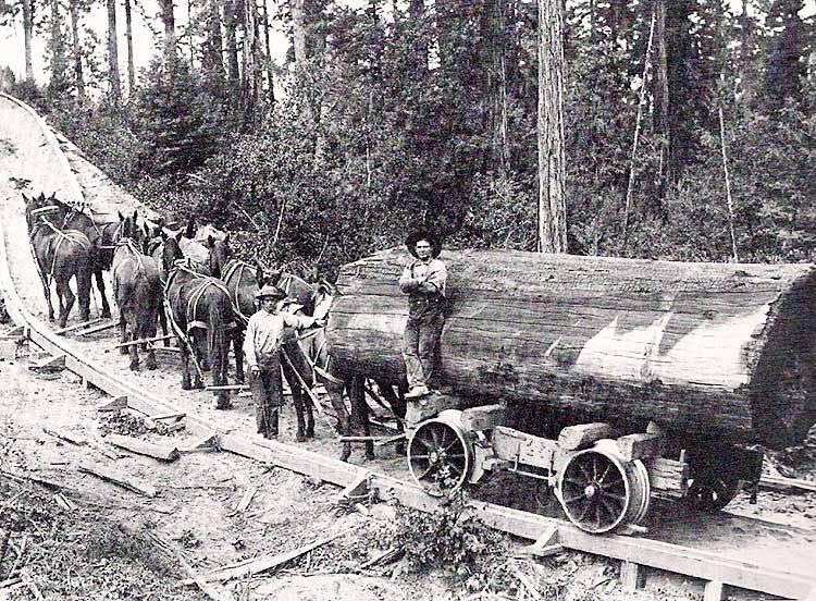 Horses pulling big log on a pole road.