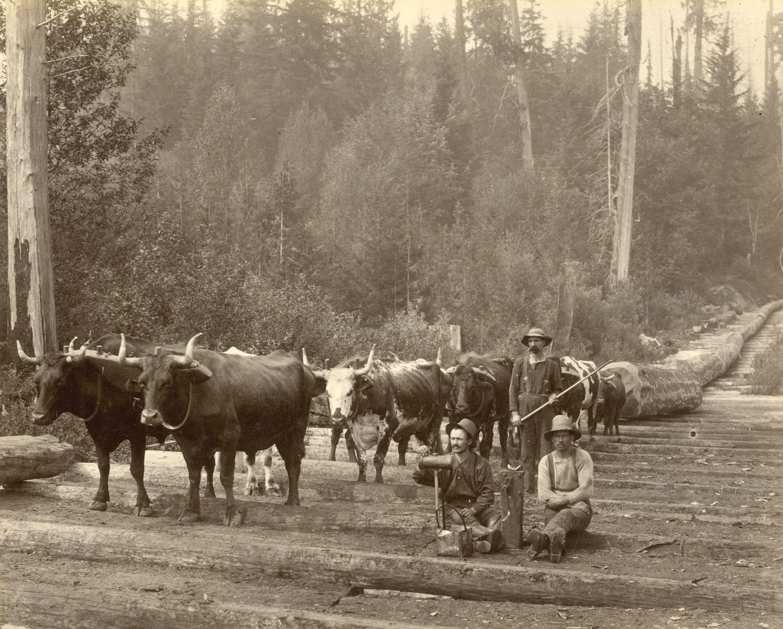 1889 Logging Scene near Vancouver, B.C.