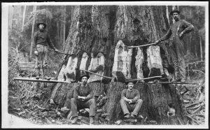 4 men starting a hinge cut.