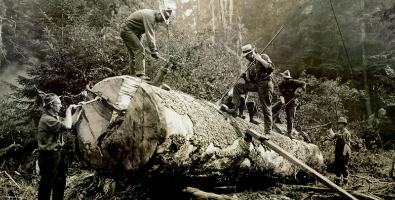 big logs,logging,forestry,splitting wedges,saw milling history