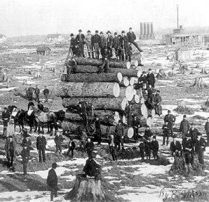 1890s Horses drafting a big load