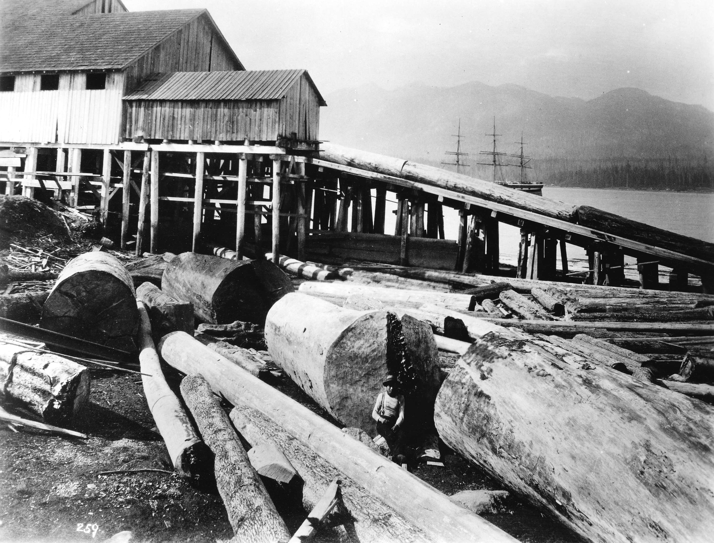 1888 Logs on chute (jack ladder) at Hastings Sawmill