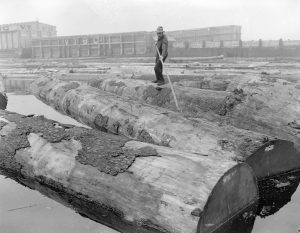 1944 Logs in sorting boom at Pacific Mills