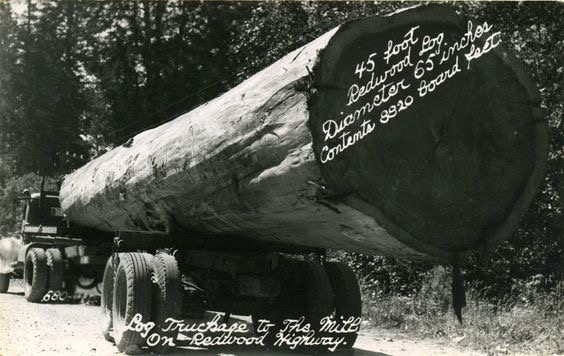45 ft redwood log 65 inch diameter 8820 bd ft