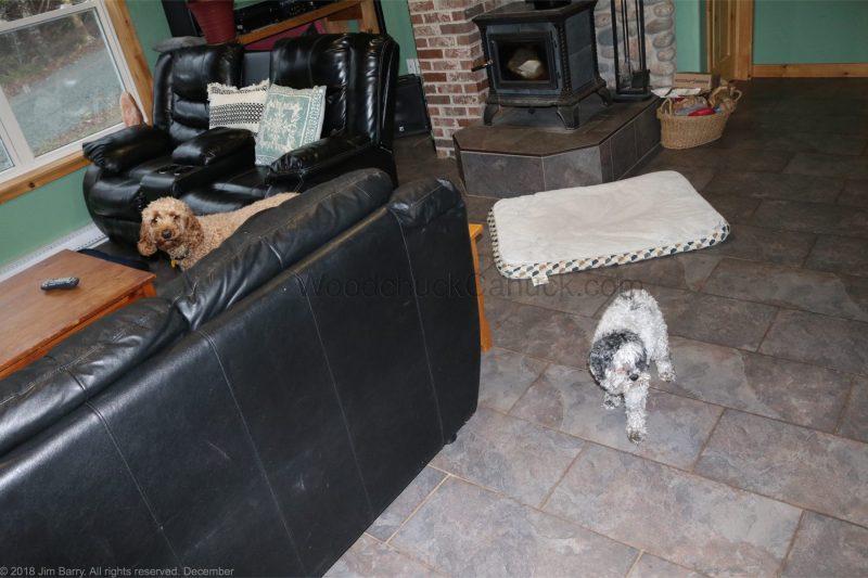 DIY,paw prints,framed paw prints,dog prints