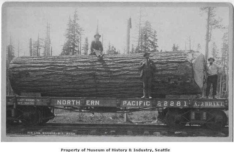 1895 Fir log.