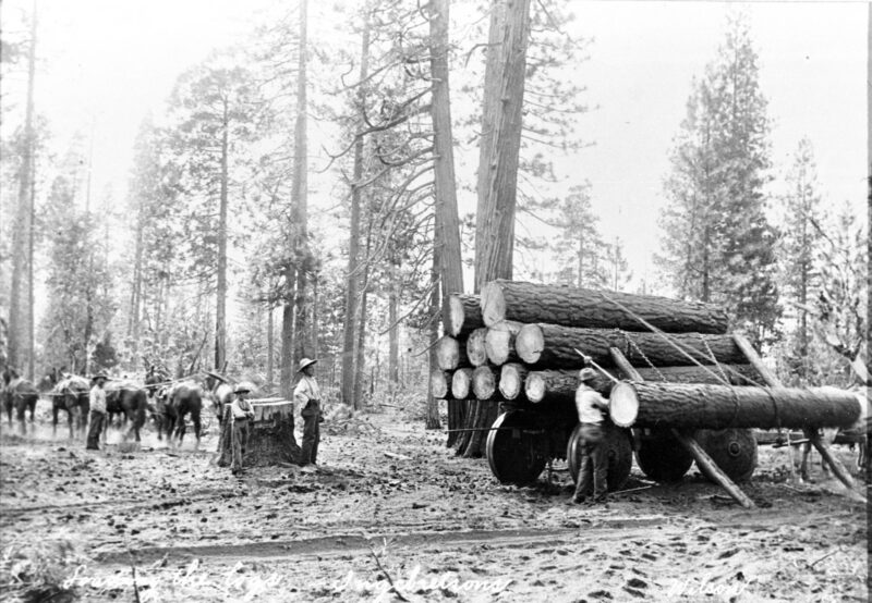 1907-1910 Horse logging employing the parbuckle method.