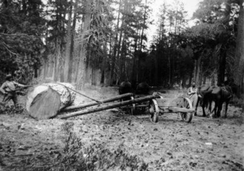 1910 Demaris Logging, Crook County, Oregon