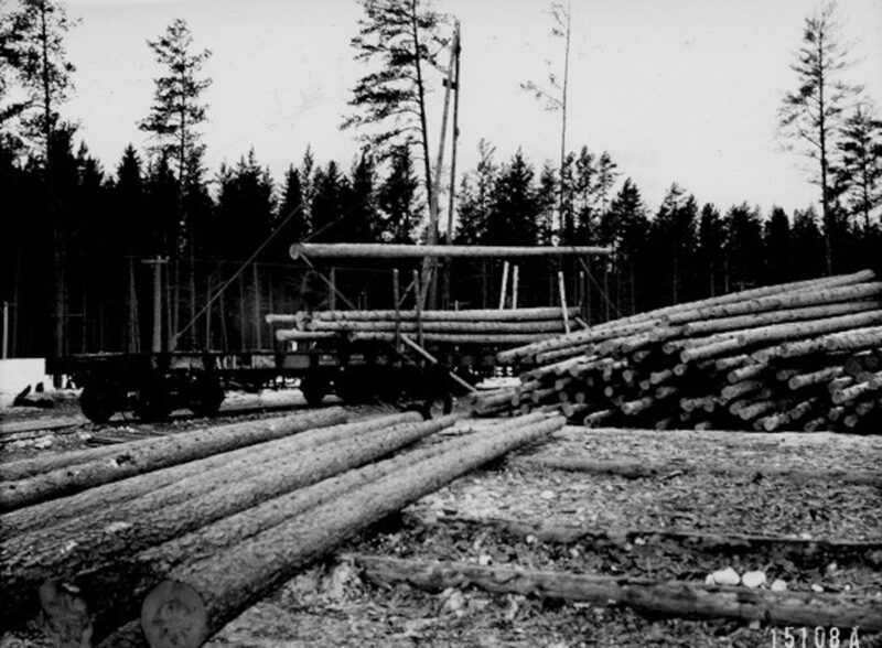 1912 Loading piles cut from norway pine, Minnesota.
