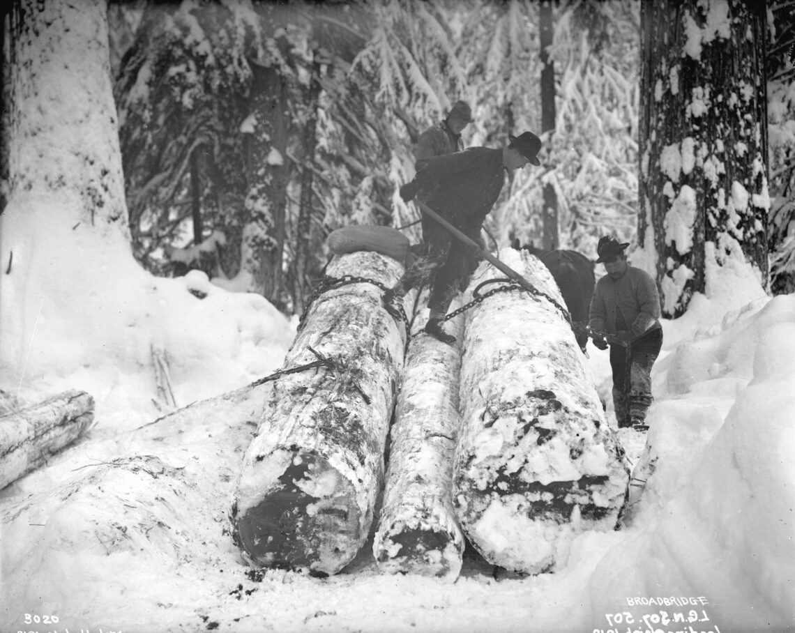 1914 Men attaching chains to logs in snow covered forest using the parbuckle method.