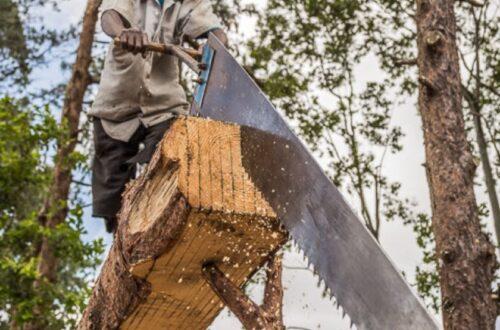 Vintage logging - Saw pits : The sawyer Thyolo Malawi.