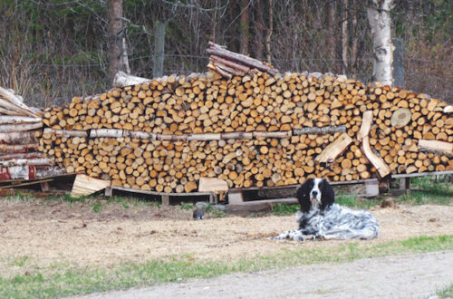 Firewood works of art.
