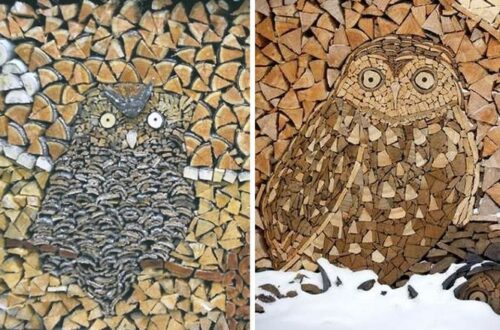 Owls in the firewood pile.
