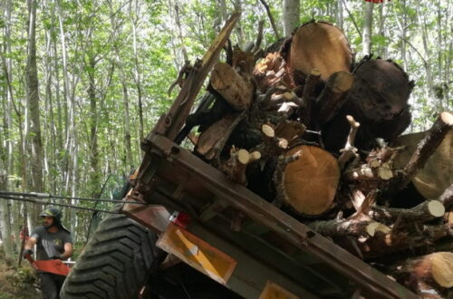 Tractor with trailer laden with wood tips on its side in the woods. Firefighters assist.