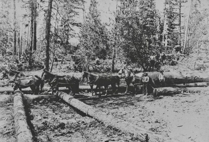 1895 Beal's Camp, Sierra Lumber Co., July 10