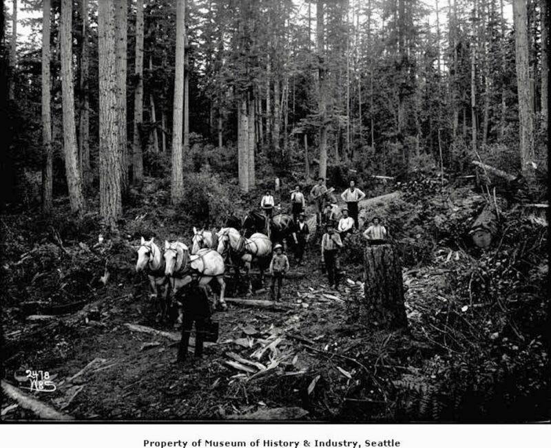1904 Horse team hauling logs on skid road