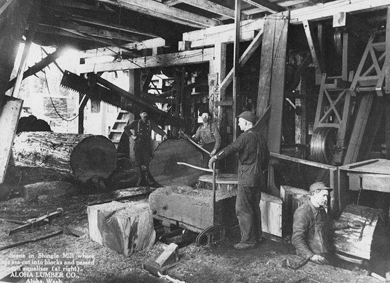 1920s Aloha Lumber Co. shingle mill interior.