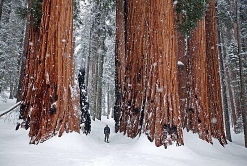 Standing among winter giants.