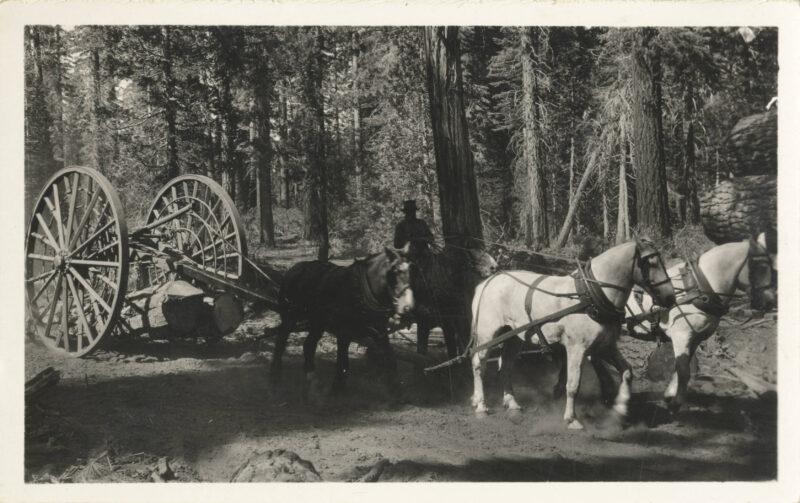 1910 Big wheel logging.