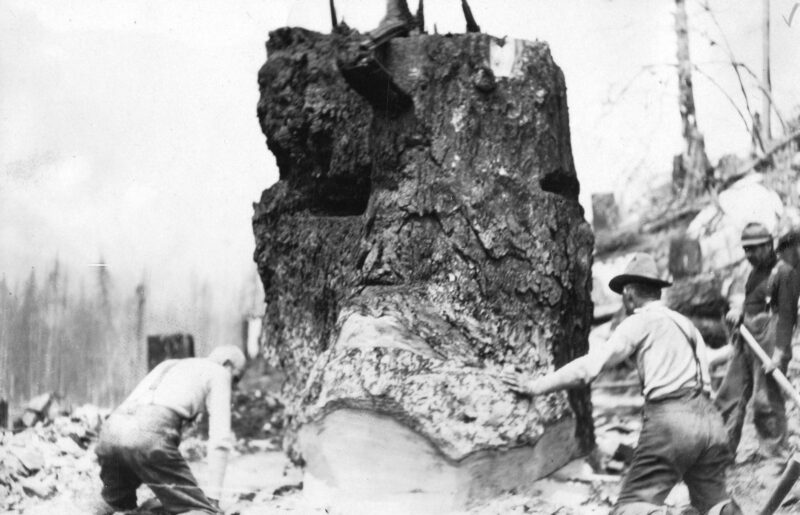 1910 Coquitlam Dam land clearing