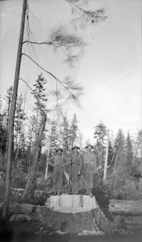 1911-1912 A 3 man stump cut.
