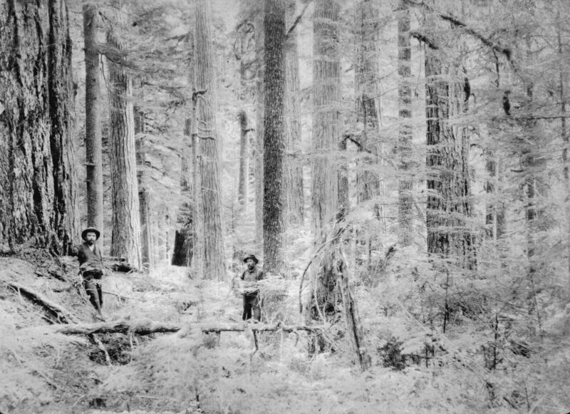 1900 Two loggers among trees in the forest.