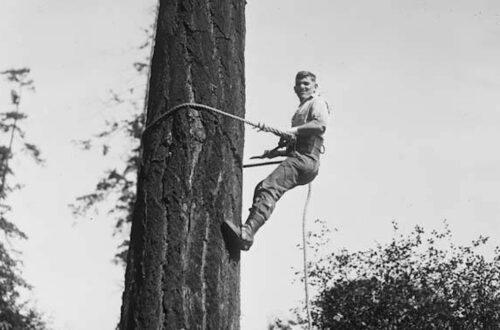 1926 High rigger climbing a spar tree.