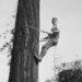 1926 High rigger climbing a spar tree.