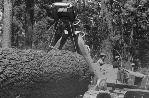 Humbug Logging