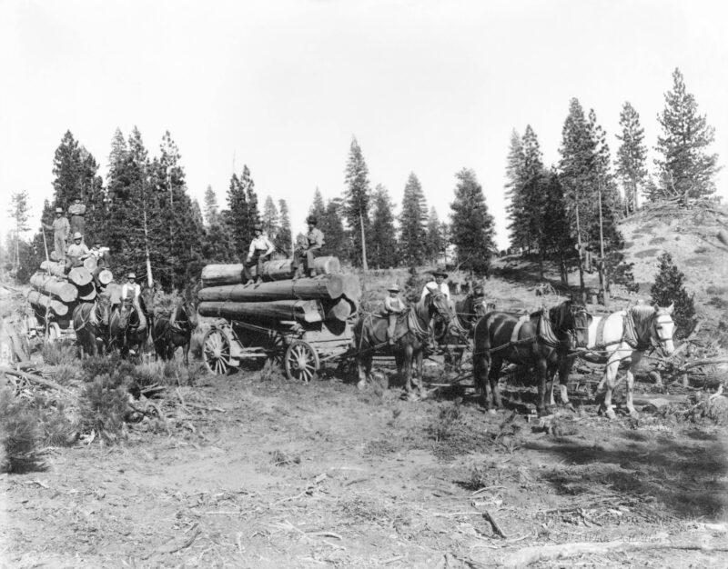 1890s Logging Horses.